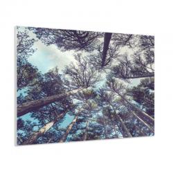 Foto forex  rectangular